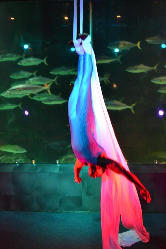 Aerial Silk
